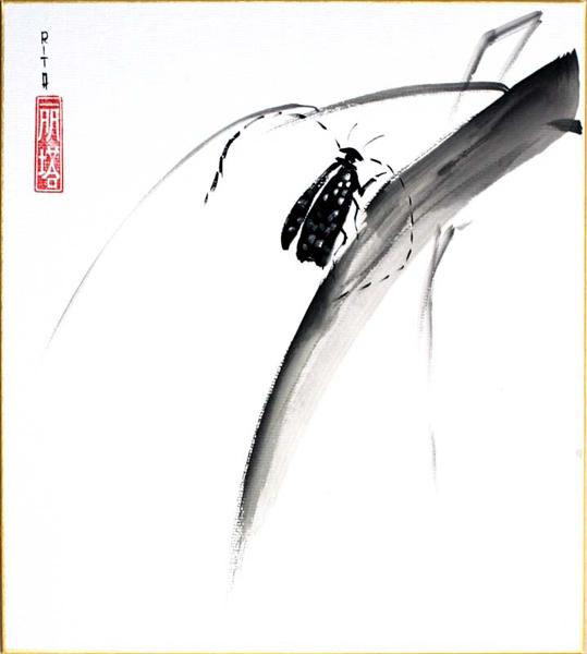 shikishi-gross-29